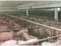 Carnea de porc din R.Moldova...