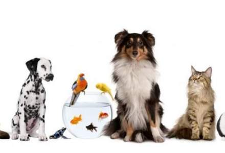 Romanii au cheltuit 177 MIL. euro pe produse destinate animalelor de companie in 2014