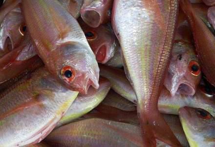 Romfish: Reducerea TVA ar scadea preturile la peste cu 6-8%