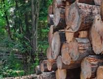 Holzindustrie Schweighofer:...