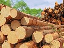 Scandalul Holzindustrie...