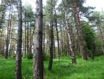 Holzindustrie Schweighofer,...
