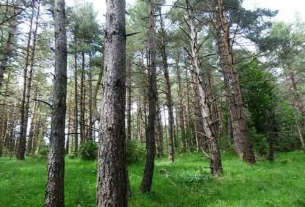 Holzindustrie Schweighofer, companie implicata in scandalul lemnului taiat ilegal, spune ca noul Cod Silvic ar putea duce la o retragere din Romania