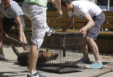 Romania, denigrata in centrul Vienei pentru uciderea cainilor maidanezi. O replica a Holzindustrie Schweighofer?