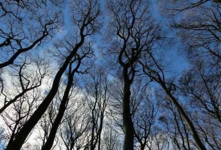 PC-PLR propune interzicerea exportului de lemn pentru 5 ani
