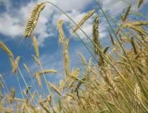 Constantin: Fermierii ar...