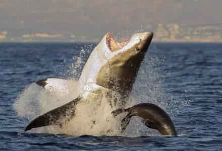Ce trebuie sa stie un investitor inainte de lupta cu 'rechinii' Forex
