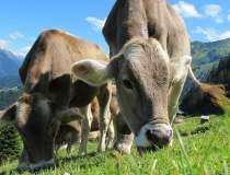 Crescatorii de animale se...