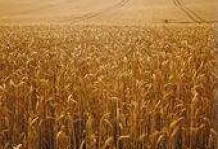 Rusia: Interdictia exporturilor de cereale afecteaza producatorii europeni de bere si alimente