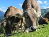 Cat contribuie agricultura UE...