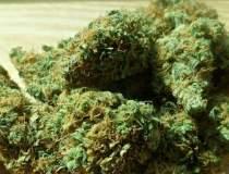 600 de grame de canabis,...