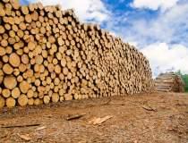 Holzindustrie, in fata...