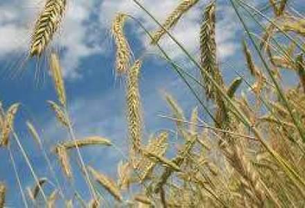 Importurile de cereale prin Portul Constanta au crescut cu peste o treime anul trecut