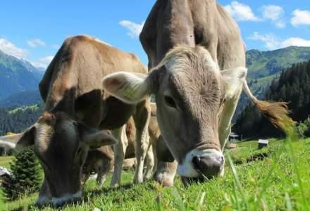 Fermierii din sectorul laptelui pot depune cerere de ajutor financiar de 240-2.900 euro pe beneficiar