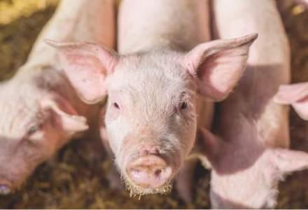 APIA: Cererile pentru ajutorul de 2,3 milioane de euro alocat pot fi depuse de crescatorii de porci pana pe 8 aprilie