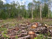Cantitatea de lemn taiat...