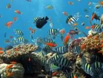 35% din Marea Bariera de...