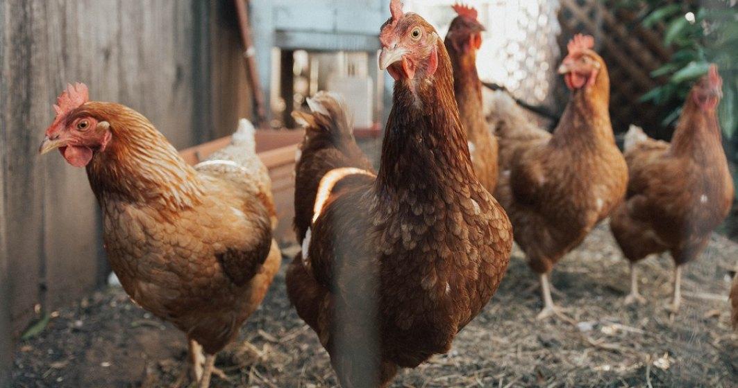 China a raportat primul caz de infecție cu tulpina H10N3 a gripei aviare la om
