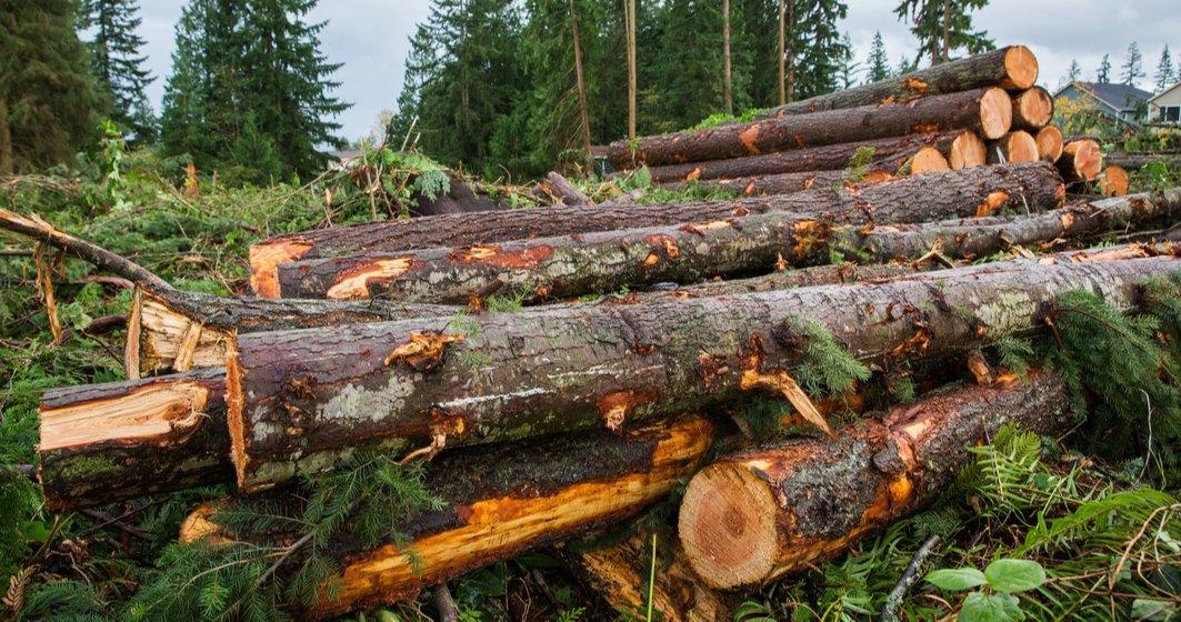 Datele arată că s-a tăiat mai puțin lemn decât în anii trecuți