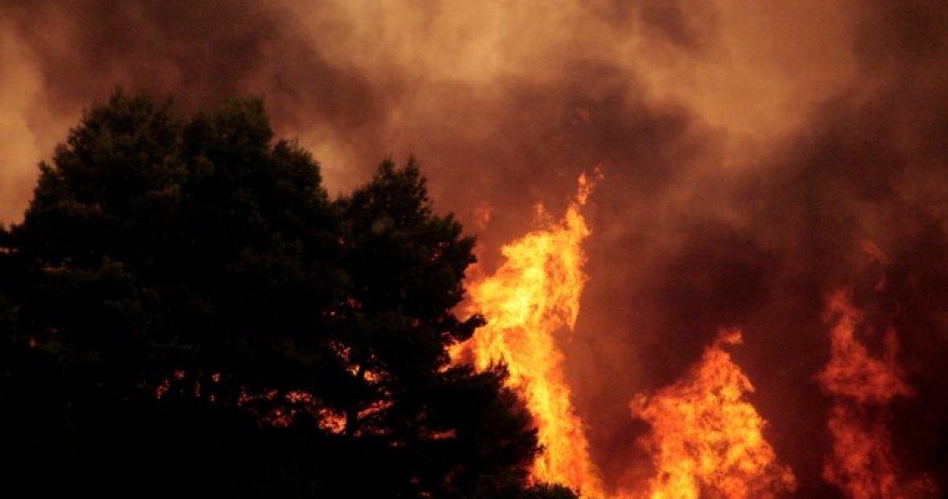 12 hectare de pădure, afectate de un incendiu