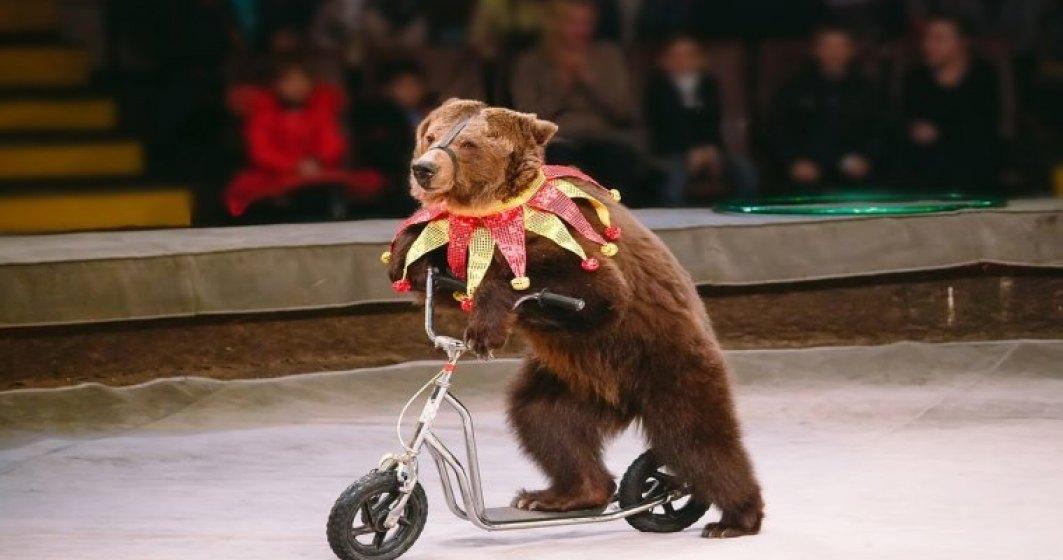 Primaria Capitalei vrea interzicerea folosirii animalelor in circuri si expozitii