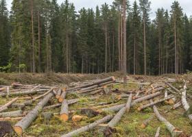 """România va avea o """"bursă a lemnului"""" în 2022"""