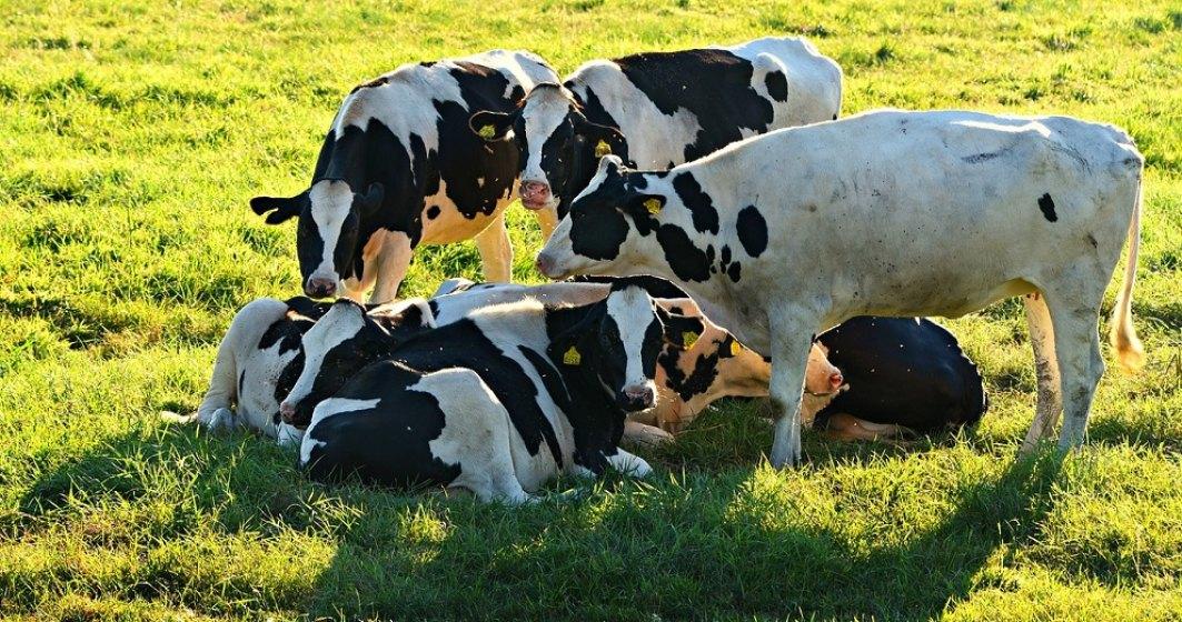 APIA primeşte cereri de solicitare a ajutorului de stat în sectorul creşterii animalelor pentru 2021