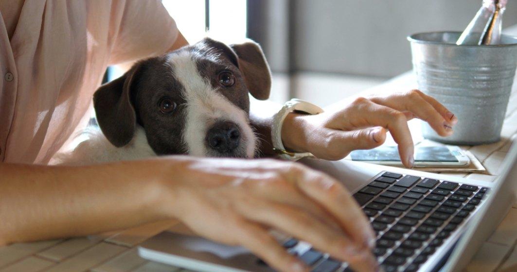 Zentiva: Angajații s-au dovedit productivi și de acasă. Vom păstra un mod de lucru hibrid, pe termen lung