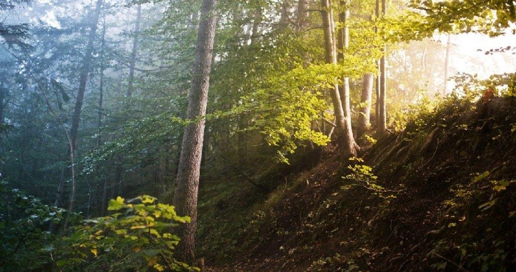 Emisiile de CO2, CH4 și N2O rezultate din arderea lemnului din România, comparabile cu cele ale Germaniei și Franței. Cât lemn este ars, anual, în România