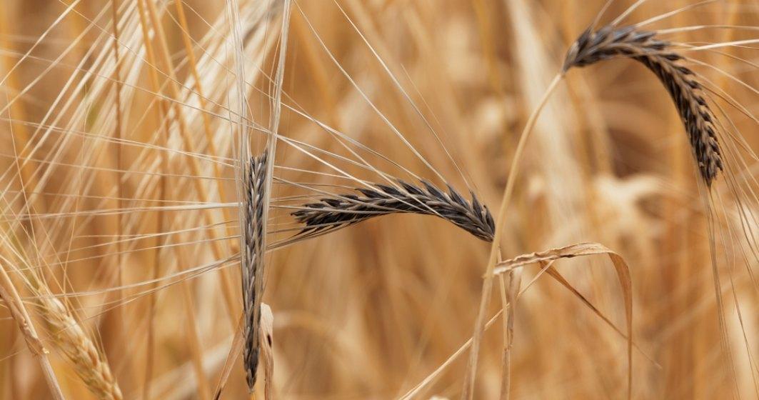 Ministerul Agriculturii: toți agricutorii afectați de secetă vor primi despăgubiri