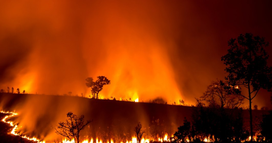 In Australia a ars o suprafata mai mare decat Elvetia