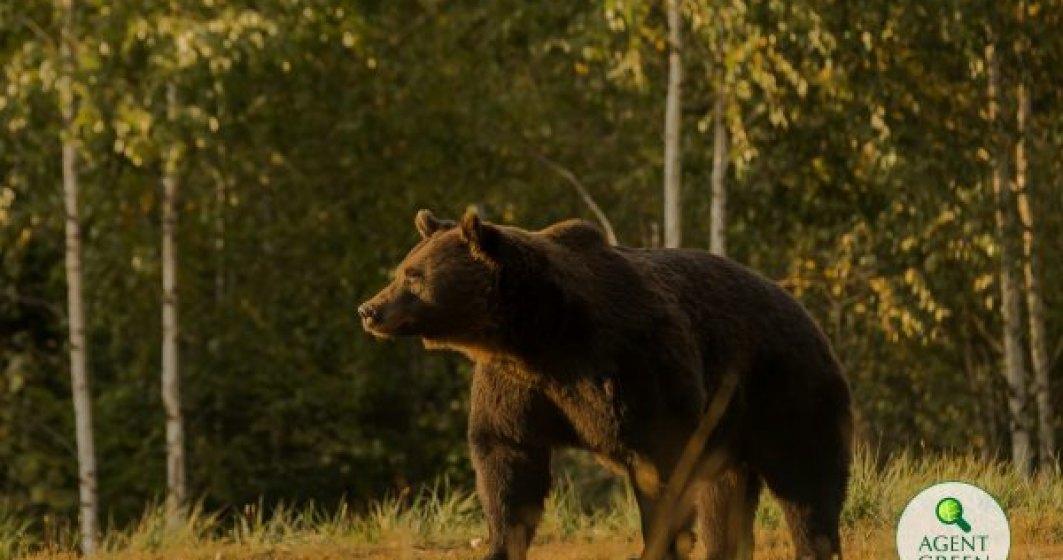 Europarlamentarul Nicu Ștefănuță a sesizat Comisia Europeană în legătură cu ursul împușcat