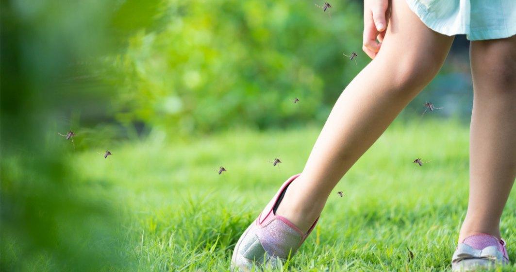 Bucureștenii s-ar putea trezi cu o invazie de țânțari. Tratamentele au fost amânate