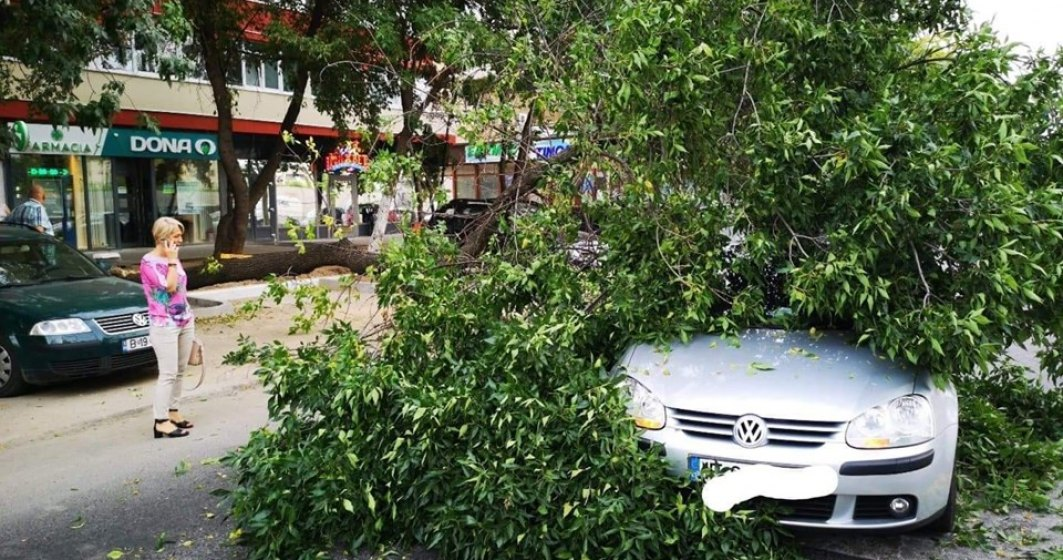 """Cimentarea copacilor duce, """"surprinzator"""", la primele incidente"""