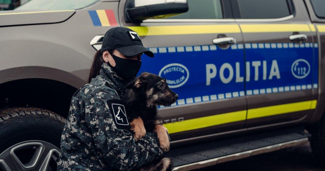Mai multe controale în traficul din România: amenzi de peste 14.000 de lei pentru șoferii din Ilfov