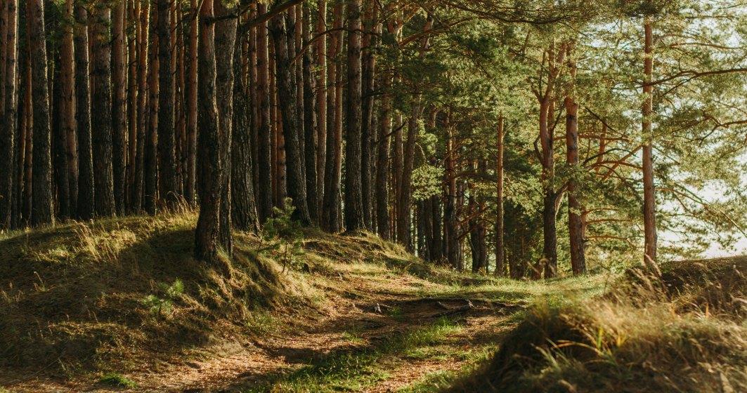 """Senatul a adoptat proiectul de înfiinţare a """"DNA-ului Pădurilor"""""""