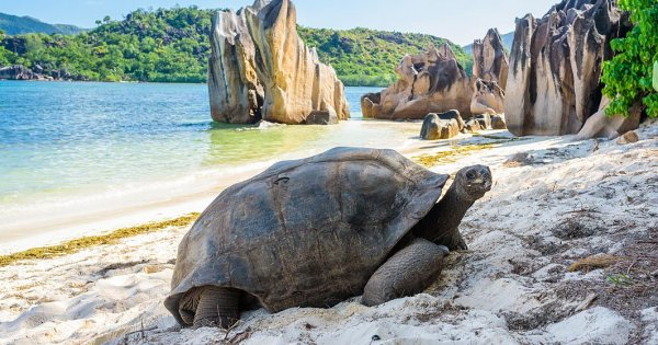 Unde fugim de ger și zăpadă: Cinci dintre cele mai frumoase insule exotice...