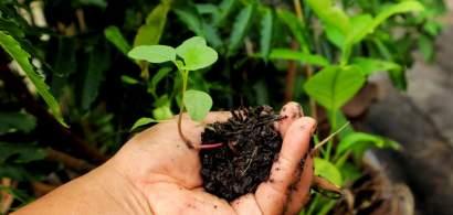 Eurostat: Doar 2,4% din suprafata agricola a Romaniei este reprezentata de...