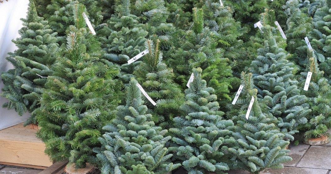 IGPR: Peste 4.000 de pomi de Crăciun confiscaţi de poliţişti în ultima săptămână
