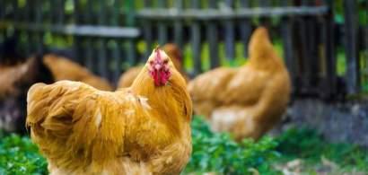 Agroland intră pe piața ouălor de consum, prin preluarea fermelor Avicola...