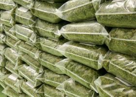 PSD vrea să legalizeze marijuana în scopuri medicinale