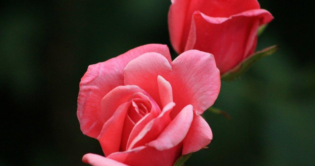 Aproape 1,4 milioane de romani isi serbeaza onomastica de Florii