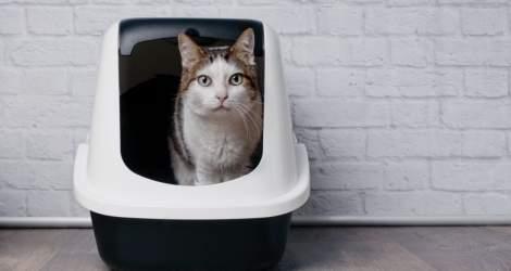 Care este cea mai eficientă litieră pentru pisici?