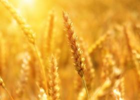 Adrian Oros, ministrul Agriculturii: În urma verificărilor, a reieşit că...