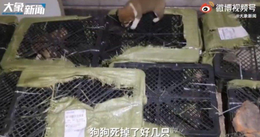 Un nou trend bizar a prins popularitate în China - cutiile misterioase cu animale