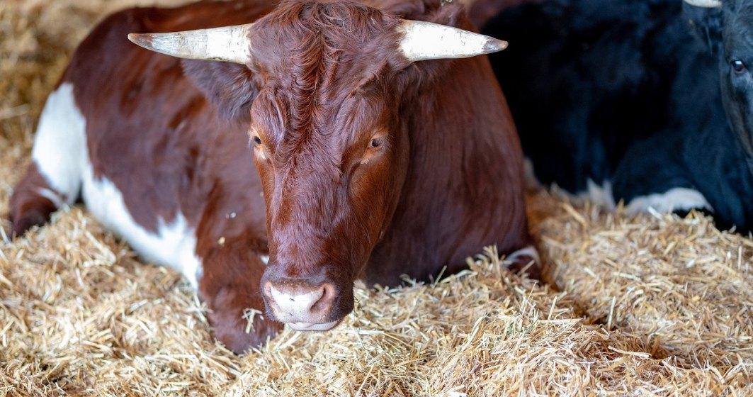 Pot fi sau nu deschise târgurile de animale în România? Ce spune ministrul Agriculturii