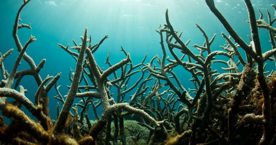"""""""Zonele moarte"""" din oceane: noul motiv de îngrijorare al oamenilor de știință"""
