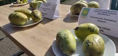 FOTOREPORTAJ în livada cu fructe exotice a Universității de Științe...