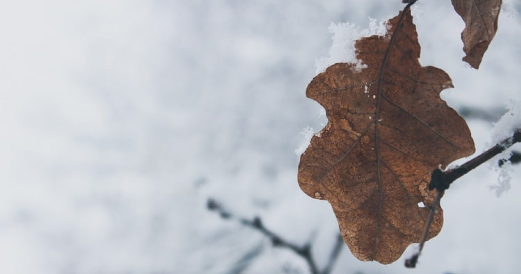 Meteo: Ninsori, polei, vant puternic si frig, de luni dimineata pana marti