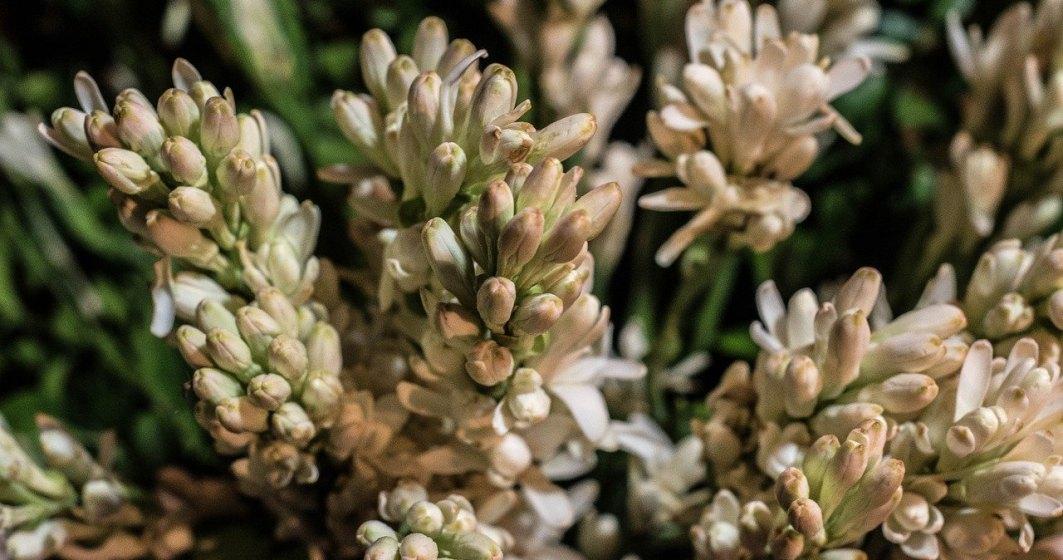 România va avea prima floare protejată la nivel european